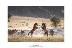 Namib Grace