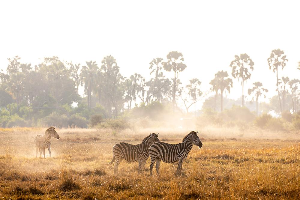 Botswana Chitabe Lodge photography Teagan Cunniffe