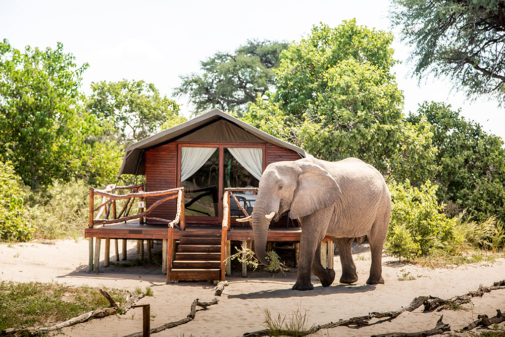 Botswana Camp Savute Island Lodge photography Teagan Cunniffe