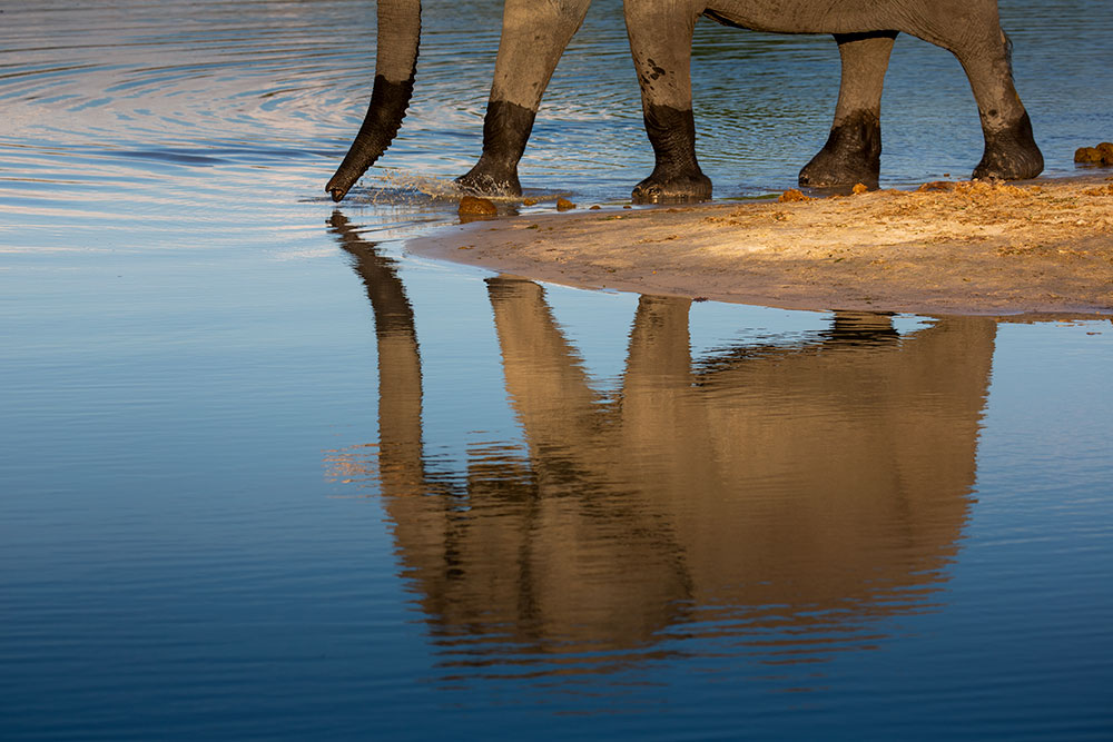 Botswana Camp Savute Island Lodge photography Teagan Cunniffe