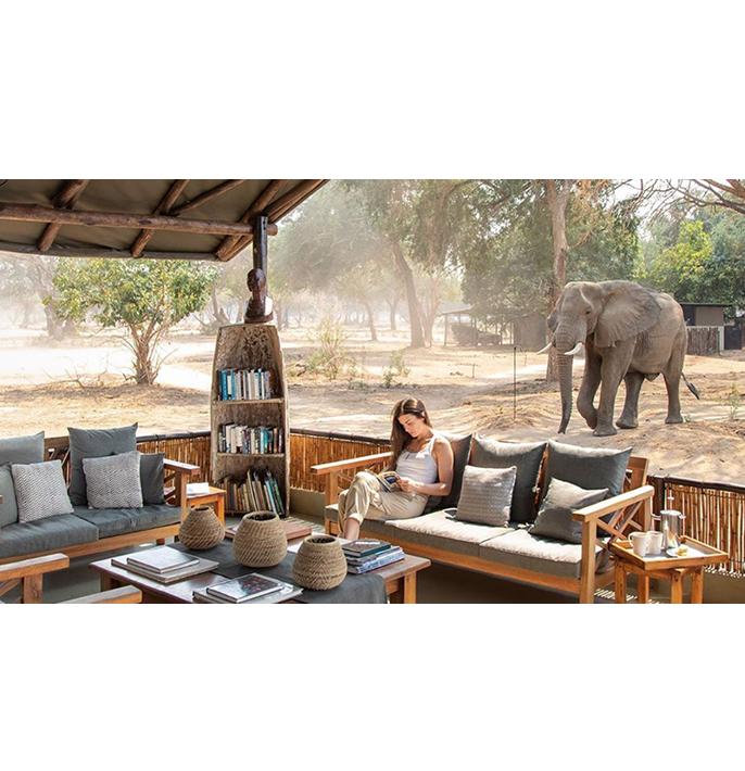 Old Mondoro elephants in camp