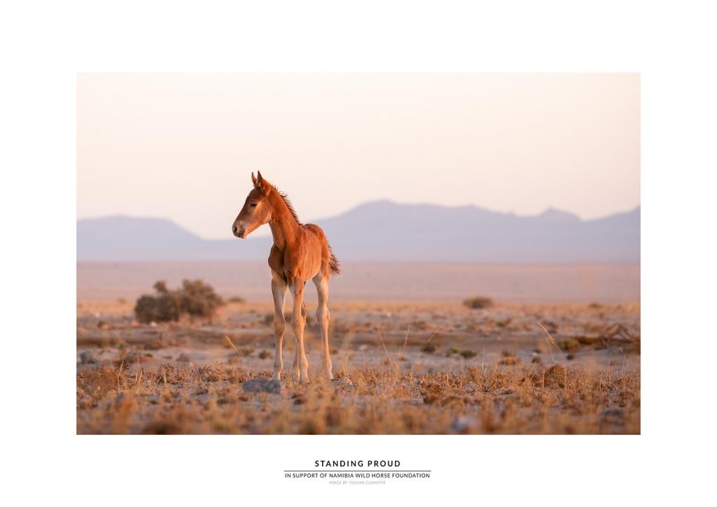 Zohra Namibia Wild Horses Foundation